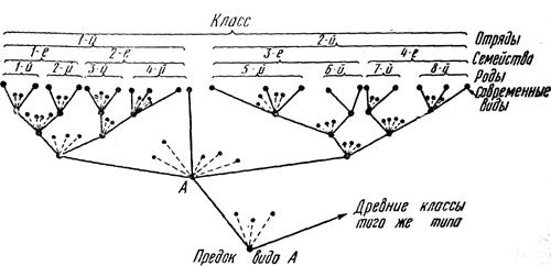 obrazovanie-novyx-vidov-2